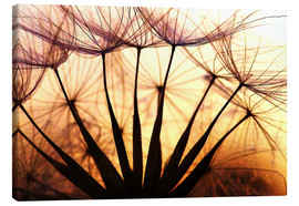 Canvas print  Dandelion in the sunset II - Julia Delgado