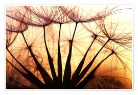 Premium poster Dandelion in the sunset II