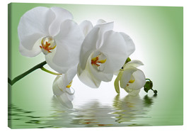 Canvas print  Orchid with Reflection - Atteloi