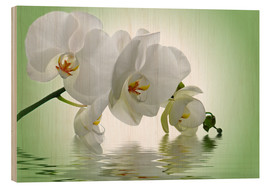 Wood print  Orchid with Reflection - Atteloi
