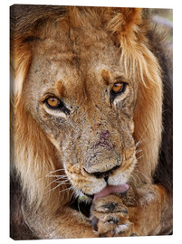 Canvas  View of the lion - Africa wildlife - wiw