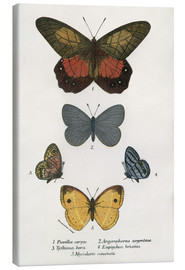 Canvas print  Butterflies - English School
