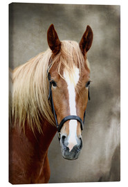 Canvas print  Horse - WildlifePhotography