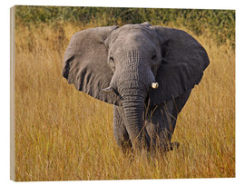 Wood print  Elephant in the gras - Africa wildlife - wiw