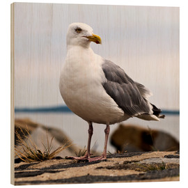 Wood print  Seagull at the port of Sassnitz, on the island of Rügen - CAPTAIN SILVA