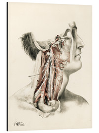 Aluminium print  Head and neck. Internal carotid and ascending pharynx and cranial nerves in the neck area - G. H. Ford