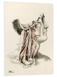 Foam board print  Head and neck. Internal carotid and ascending pharynx and cranial nerves in the neck area - G. H. Ford