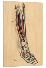 Wood print  The lower limb area. Front of the leg and dorsum of the foot - G. H. Ford