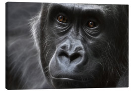 Canvas print  gorilla - WildlifePhotography