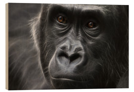 Wood  gorilla - WildlifePhotography