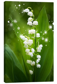 Canvas print  Lily of the valley - Steffen Gierok