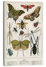 Canvas print  Insects - English School