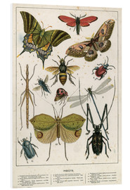 Foam board print  Insects - English School