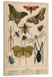 Wood  Insects - English School