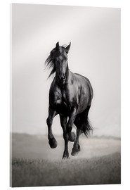 Acrylic print  Horse Friesian in the steppe - Monika Leirich