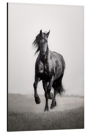 Aluminium print  Horse Friesian in the steppe - Monika Leirich