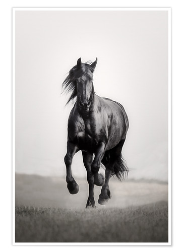 Premium poster Horse Friesian in the steppe
