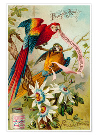 Premium poster Parrots, macaws and passionflowers