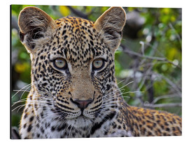 Alu-Dibond  The leopard - Africa wildlife - wiw