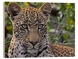 Wood print  The leopard - Africa wildlife - wiw