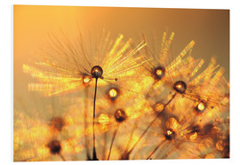 Foam board print  Dandelion golden beads - Julia Delgado