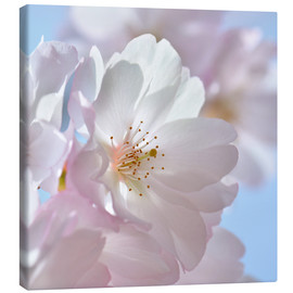 Canvas print  Cherry - Atteloi