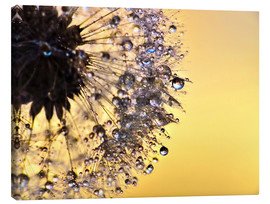 Canvas print  Dandelion yellow - Julia Delgado