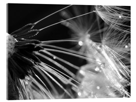 Acrylic print  Dandelion black and white - Julia Delgado