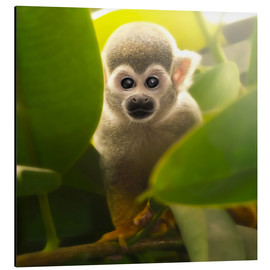Aluminium print  baby monkey - Photoplace Creative