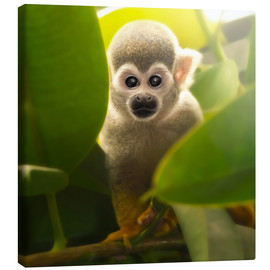 Canvas  baby monkey - Photoplace Creative