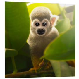 Forex  baby monkey - Photoplace Creative