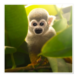 Premium poster  baby monkey - Photoplace Creative