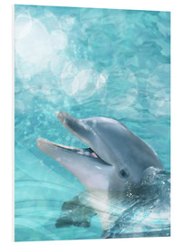 Forex  Dolphin - Humor - Dolphins DreamDesign