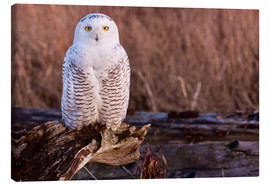Canvas print  Snowy owl on a tree - Art Wolfe