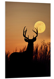 Foam board print  Whitetail Deer with full moon - Larry Ditto