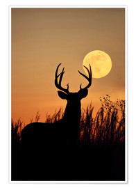 Premium poster  Whitetail Deer with full moon - Larry Ditto