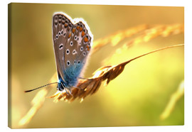 Canvas  Butterfly in late summer - Julia Delgado