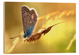 Wood print  Butterfly in late summer - Julia Delgado