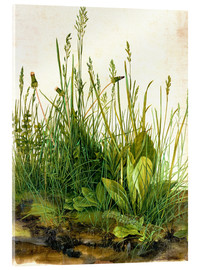 Acrylic print  The great piece of turf - Albrecht Dürer