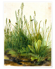 Poster  The great piece of turf - Albrecht Dürer