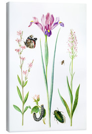 Canvas print  Red catchfly, rose, iris & orchis - Maria Sibylla Merian