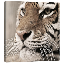 Canvas  Tigerportrait - Marcel Schauer