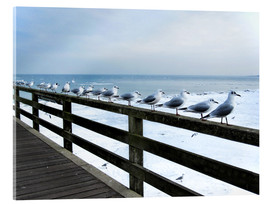 Acrylic glass  Seagull line-up, Baltic Sea - Städtecollagen
