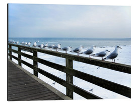 Aluminium print  Seagull line-up, Baltic Sea - Städtecollagen
