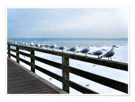 Premium poster Seagull line-up, Baltic Sea