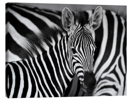 Canvas print  Zebra black and white - HADYPHOTO