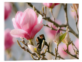 Acrylic print  The scent of spring - Moqui, Daniela Beyer