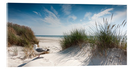 Acrylic print  Dune with fine beach grass and seagull, Sylt - Reiner Würz RWFotoArt
