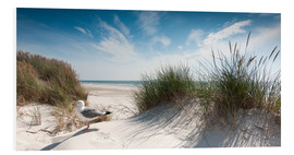 Foam board print  Dune with fine beach grass and seagull, Sylt - Reiner Würz
