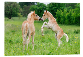 Acrylic glass  Haflinger horses foals playing and rearing - Katho Menden